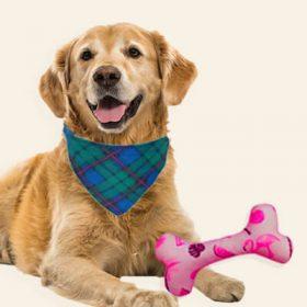 Customized Pet Accessories